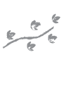 logo iguana-crossing sm