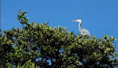 Guaque-Isabela-Island