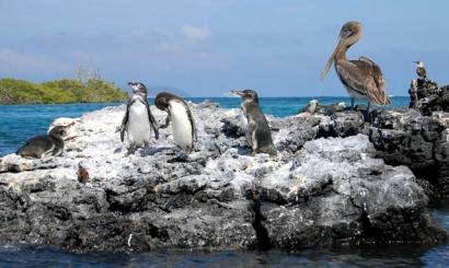 Penguins-and-Families-Isabela-Tour